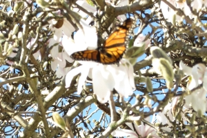 fleurblancheetpapillondhiver