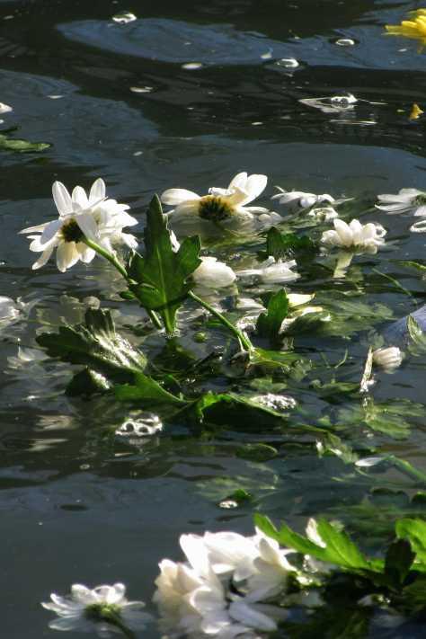 fleurblancheswansea