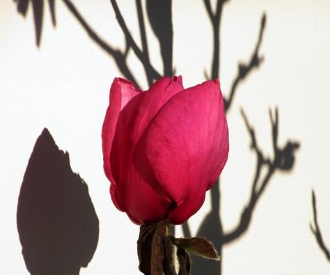 fleurdhiveretombre