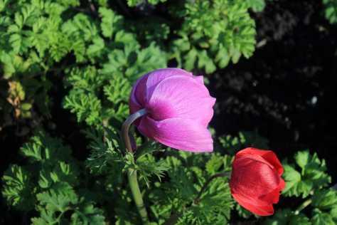 fleur3150%